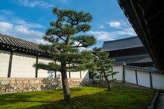 Pino giapponese nel giardino del tempio buddista Fotografia Stock