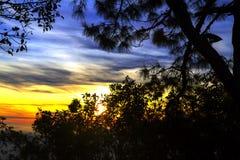 Pino hermoso de la silueta de la salida del sol Imagenes de archivo