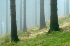 Pino - legno Fotografie Stock Libere da Diritti