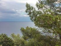 Pino Mediterraneo con il mare calmo durante la sera di estate in Ibiza fotografie stock libere da diritti