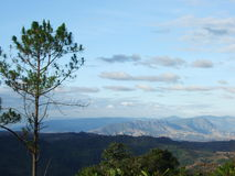 Pino, montagna, nuvola e cielo blu Fotografia Stock