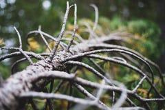 Pino morto rotto nella foresta in Spagna fotografia stock