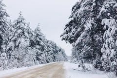 Pino nella copertura di neve bianca attraverso la foresta di inverno fotografia stock libera da diritti