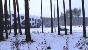 Pino in neve, inverno, foresta di inverno, erba innevata video d archivio