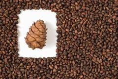 Pino, nuez, semilla, cedro, Brown, natural, comida, cono, marco imagen de archivo libre de regalías