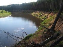 Pino, río, naturaleza Fotos de archivo