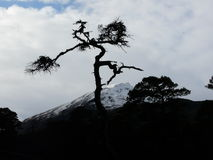 Pino scozzese a Glen Affric immagine stock libera da diritti