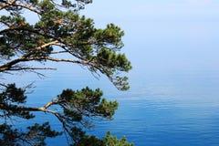 Pino sobre el lago Baikal Fotos de archivo