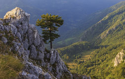 Pino sobre el valle del otoño foto de archivo libre de regalías
