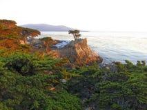 Pino solitario en la costa costa de Big Sur Imagen de archivo