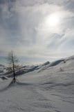 Pino solo su una neve Fotografia Stock Libera da Diritti