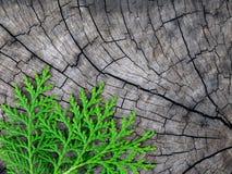 Pino su vecchio legno Fotografia Stock Libera da Diritti