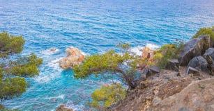 Pino sul clifie roccioso ripido, Spagna Fotografia Stock