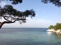 Pino sull'isola di Thassos Immagini Stock