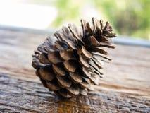Pino sulla tavola, fondo del cono della natura Fotografia Stock