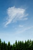 Pino superior y cielo hermoso Imagen de archivo