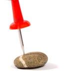Pino vermelho o uma pedra no branco Fotografia de Stock