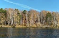 Pino y abedul en la orilla de un pequeño lago Foto de archivo
