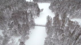 Pino y abetos congelados aéreos en la nieve en invierno Muchos árboles, madera Opinión aérea del bosque grueso Abejón del helicóp metrajes