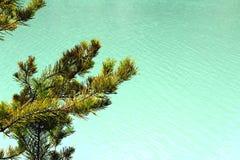 Pino y agua Foto de archivo libre de regalías