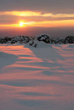 Pinon Sunset. Brilliant sunset casting a pink glow over freshly fallen snow Royalty Free Stock Image