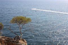 Pinos al lado del mar Imagenes de archivo