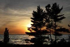 Pinos blancos del este en la orilla del lago Hurón en la puesta del sol Fotografía de archivo