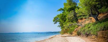 Pinos de la playa de Elia Imagenes de archivo