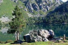 Pinos de montaña en los Pirineos Imagenes de archivo