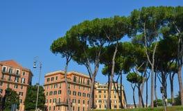 Pinos de piedra italianos Pinus Pinea en Roma imagen de archivo