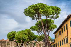 Pinos de piedra italianos Pisa, Italia Imagen de archivo libre de regalías