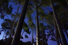 Pinos del parque de Hagley en la noche fotos de archivo
