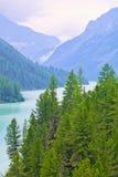 Pinos delgados en la orilla de un lago de la montaña Imagenes de archivo