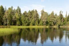 Pinos en el banco del lago Imagenes de archivo