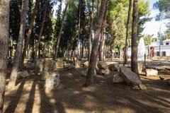 Pinos en el parque Andalucía de la ciudad imagen de archivo