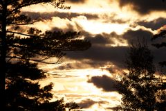 Pinos en la puesta del sol foto de archivo