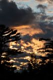 Pinos en la puesta del sol foto de archivo libre de regalías