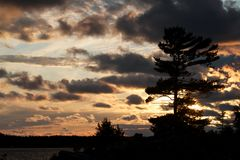 Pinos en la puesta del sol Imagen de archivo libre de regalías