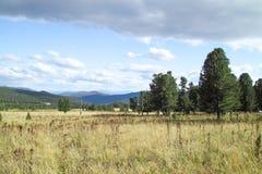 Pinos en las montañas Foto de archivo libre de regalías