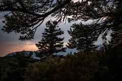 Pinos en silhuette en la oscuridad en las montañas de Utah imágenes de archivo libres de regalías