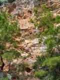 Pinos en un fondo de rocas Imagen de archivo libre de regalías
