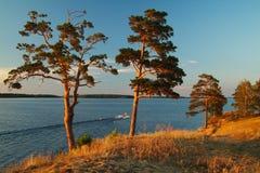 pinos en una orilla del lago Fotos de archivo libres de regalías