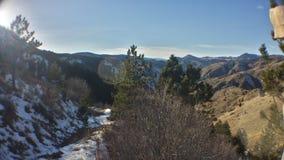 Pinos entre las colinas Foto de archivo libre de regalías