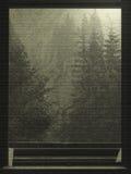 Pinos fuera del fondo de la ventana Fotografía de archivo