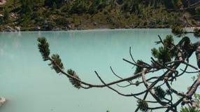 Pinos por el lago Sorapis, dolomías, Italia fotos de archivo