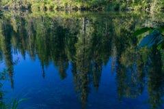 Pinos reflejados en el agua Fotografía de archivo