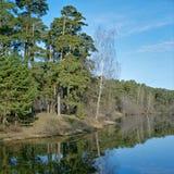Pinos y abedul en la orilla del lago Fotos de archivo