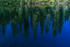 Pinos y cielo reflejados en el agua Foto de archivo libre de regalías
