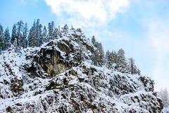 Pinos y montaña llenados de nieve foto de archivo libre de regalías