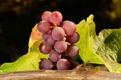Pinot Gris Bunch Stock Images